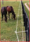 equine electric fencing
